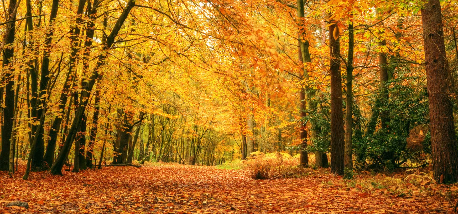 new-england-autumn-picture